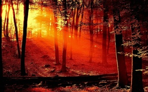 forest, sunset, nature