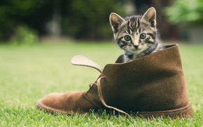 cat, animals, grass, shoes, greenery
