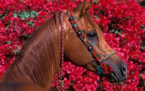 beautiful girl, stunner, horse