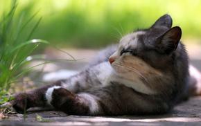 rest, grass, animals