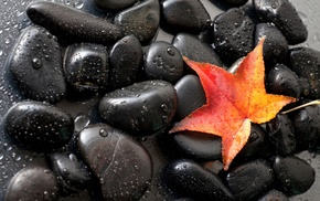 red, stones, water, leaf, nature