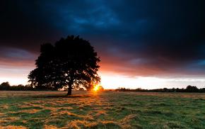 закат, сено, природа, дерево, Поле, трава