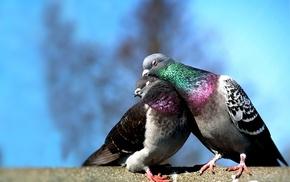 animals, tenderness, birds