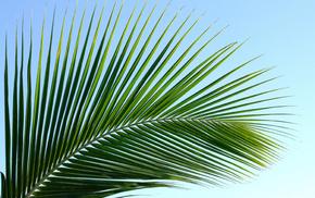 palm, nature