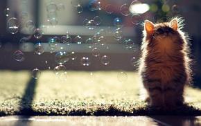 животные, Кот, пузыри