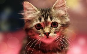 eyes, mustache, muzzle, kitten, animals