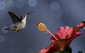 animals, bird, fly, flower