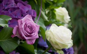 roses, leaves, shrubs, flowers