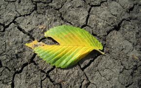 минимализм, земля, лист