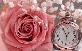vintage, rose, clocks, stunner