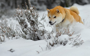 animals, winter, snow, dog