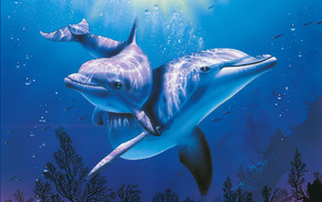 sea, beautiful, animals