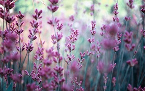 field, flowers, motion blur, nature