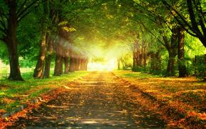 road, gold, light, greenery, nature