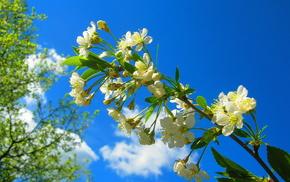 bloom, branch, macro, spring, cherry