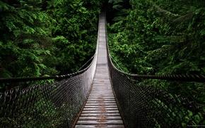 деревья, мост