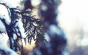 depth of field, nature, snow, bokeh, leaves