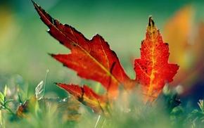 grass, macro, leaf