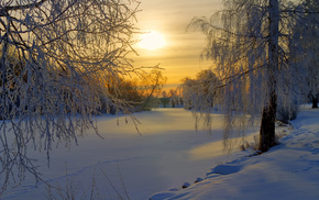morning, trees, glade, forest, winter