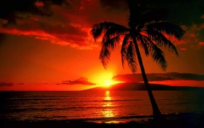 tropics, sunset, nature, red, palm