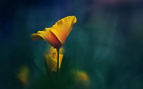 macro, yellow, background, flower