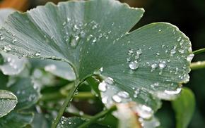 dew, leaf, drops, macro, rain