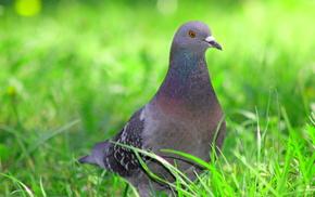animals, grass, bird