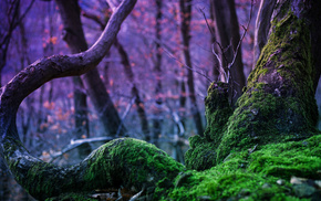 magic, moss, tree, nature, forest