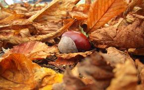 autumn, macro, nature, leaves