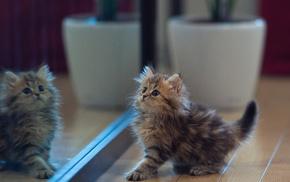kitten, mirror, reflection, animals