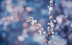 petals, macro, twigs, flowers, trees