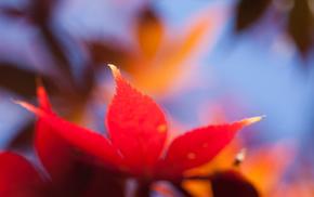 orange, macro, leaf, autumn
