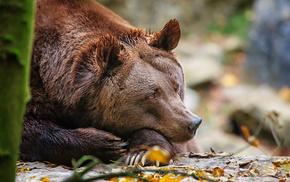 animals, rest, bear
