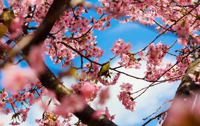 flowers, trees, Tokyo, park, bloom