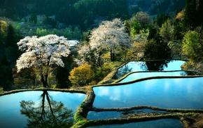 Japan, sakura, stunner