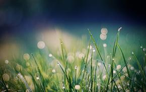 dew, macro, grass