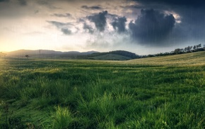 grass, rain, nature, field