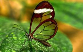 macro, butterfly, greenery, wings
