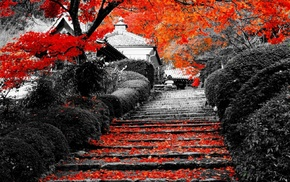 selective coloring, nature, stairs, trees, landscape, flowers