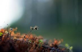 plants, depth of field, nature, flowers
