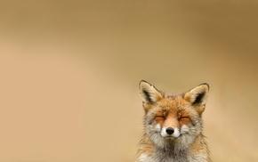 взгляд, Лиса, животные