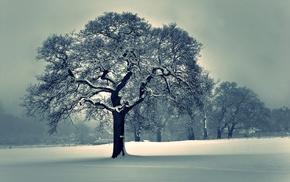 деревья, пейзаж, снег, природа