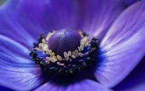 macro, flowers, blue, flower, petals