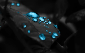 macro, water drops, leaves, closeup, selective coloring