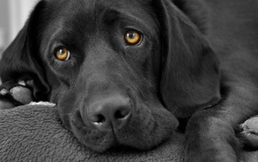 dog, animals, selective coloring, sad