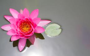 leaf, pond, flower, flowers, pink