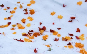 snow, leaves, winter