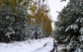 road, forest, snow, winter