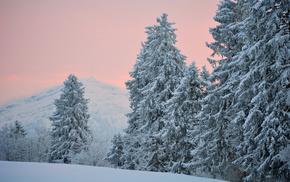 Вечер, деревья, холмы, хвоя, зима, снег
