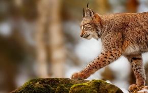 stones, predator, animals